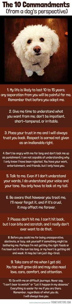 Doggy Commandments