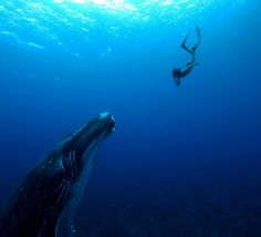 Leina+Sato,+filmée+enceinte+dans+les+eaux+polynésiennes,+sur+le+petit+écran