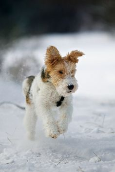 Running through the snow