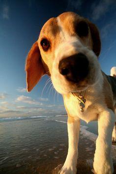 Cutie Dog have fun on the beach