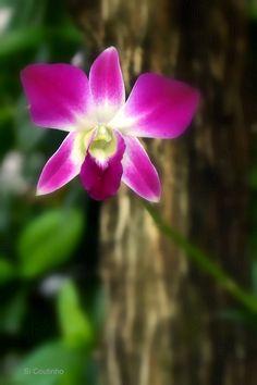 As flores do seu bairro:  Assim como a edição anterior mencionava as belezas escondidas pelos caminhos que percorremos em nosso dia a dia , essa edição feita numa manhã de 5a feira , mostra que ha nossa volta há muitas flores , cor , aroma , beleza e delicadeza .  Essas nossas amiguinhas que nos emprestam sua graça anonimamente em nossas sacadas , varanjas , canteiros , jardins , quintais , janelas , lojas  , casas , escolas , praças .... POr onde a gente olhar e durante o ano inteiro vamos…
