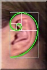 Golden Ratio Ear