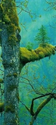 Tree on tree - Click image to find more Outdoors Pinterest pins