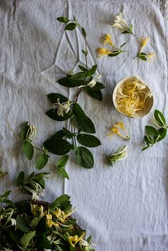 honeysuckle cordial by Beth Kirby | {local milk}, via Flickr