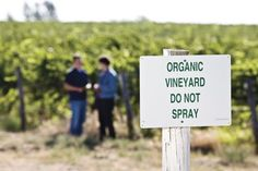 The Best Biodynamic
