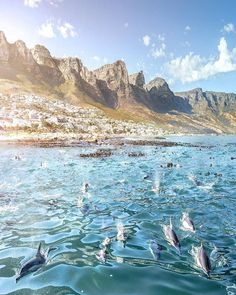 Reposting @take_me_to_africa: Autumn sunrise in Camps Bay, Cape Town, South Africa by @mijlof  #africa #southafrica #takemetoafrica #capetown #campsbay #dolphins #kaapstad #sunrise #swimming #passportbyforbes #instapassport #passionpassport #beautifulafrica #beautifuldestinations #visitafrica #travelafrica #thisisafrica #discoverafrica #wandering #wanderer #travel #travelling #travelgram #backpacking #travelblog #backpackers #postcard #honeymoon