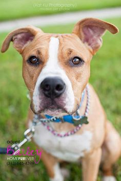 Beautiful Bailey; a professional kisser | Home FurEver Rescue