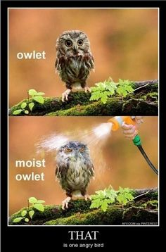 Lol, the second owl's head is so photoshoped :D