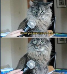 Are you aware you're a cat?