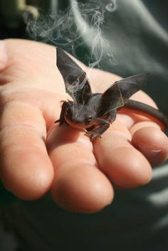 Little dragon - Funny lizard with wings held in hand.