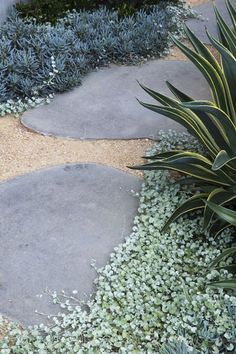 #peterfudge, Dichondra, flagstone and decomposed granite ground cover. More