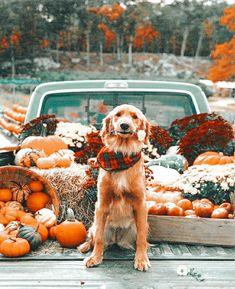 Kittens And Puppies, Pumpkin, Fall, Outdoor, Autumn, Outdoors, Pumpkins, Fall Season, Outdoor Games