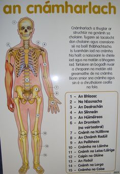 An cnámharlach - The skeleton. Finnegans Wake, Gaelic Words, Irish Language, Scottish Gaelic, Irish People, Teaching History, Help Teaching, Samhain, Skeletons