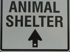 http://www.thecaninerestorationchallenge.com/assets/shelter_street_sign.jpg