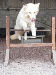 Agility training. Agility Training, Training Day, Dogs, Animals, Animales, Animaux, Pet Dogs, Doggies, Animal