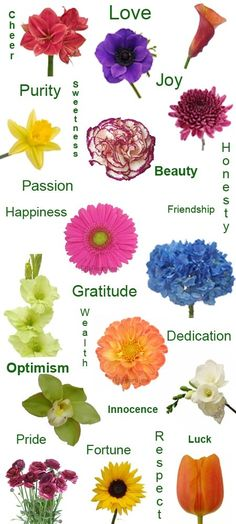 Image result for flower meanings