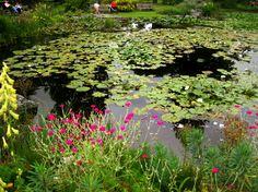 Fotos realizadas en el Jardín Botánico de la Universidad de Cambridge en julio…