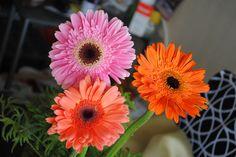 gerberas Plants, Photography, Photograph, Fotografie, Photoshoot, Plant, Planets, Fotografia