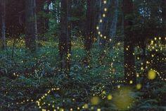 ¤ Poet Ponderings ¤ poetry, quotes & haiku - transformed by love Izumi Shikibu (Firefly Festival in Japan - Hotaru Matsuri) Okayama, Fairy Dust, Fairy Tales, Long Exposure Photos, Hotarubi No Mori, Midsummer Nights Dream, Favim, Nocturne, Up Girl