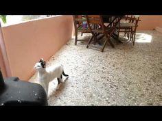 My kittens play - YouTube