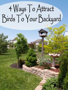 Wild birds require four things to be attracted to a backyard: food, water, shelter and nesting sites. If you make each of these four things available, you will be amazed at how many different species of birds become regular backyard guests. 1. Food. A goo