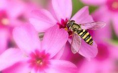 La lección de las abejas