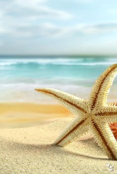 sun sand surf and starfish I Love The Beach, Pretty Beach, Am Meer, Sky And Clouds, Blue Clouds, Beach Scenes, Ocean Beach, Sand Beach, Nature Beach