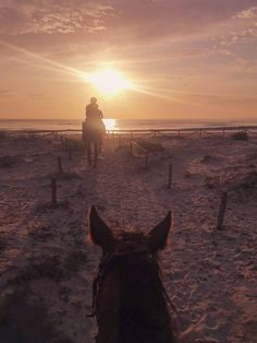 Horse trekking into sunrise Trail Riding, Horse Riding, Horse Background, Horse Girl Photography, Horse Wallpaper, Barrel Racing Horses, Surreal Photos, Horse Love, Horseback Riding