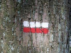 Ne vous perdez pas, suivez les marquages.  Don't get lost. Follow marks on trees!