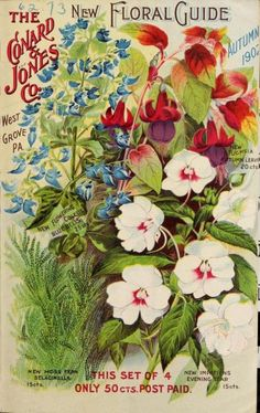 Front cover of the Conard & Jones Co Autumn 1902 'New Floral Guide' with illustrations of new Moss Fern 'Selaginella,' new Impatiens 'Evening Star,' new Fuchsia 'Autumn Leaves,' new Flowering Coleus 'Bluebells. Department of. Flower Catalogs, Seed Catalogs, Seed Illustration, Botanical Illustration, Illustrations, Vintage Seed Packets, Garden Labels, Paper Artwork, Botanical Prints