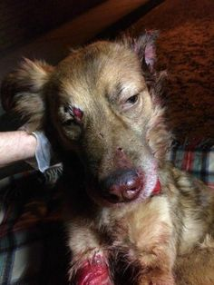 In perhaps the cruelest deed any human could do to their dog; without doubt one of man's most loyal companions, is to abandon them in an unknown area, and then walk away. And so it happened to a dog who was left alone outside of a Dogs Trust Center in Baillieston, Scotland (a suburb of …