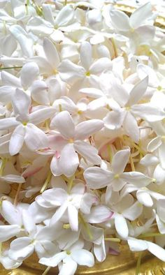 Embedded image Exotic Flowers, Amazing Flowers, White Flowers, Syria Pictures, Flower Words, Love Rose, Flower Wallpaper, Flower Making, Flower Decorations