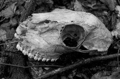 dark, skull