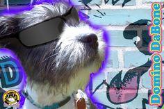 Domino DaBone  www.facebook.com/thetomcatlife