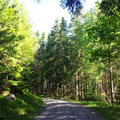 We're on the road to no where. Walking in the forest in Halmstad, Sweden. #nature