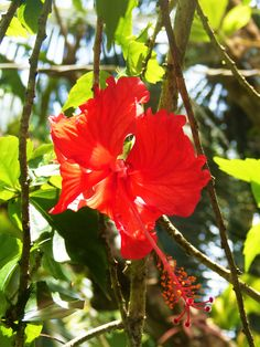 Colombia is home of the second largest biodiversity on earth. In fact, Colombia is home to over 130,000 species of plants. We found this flower in Urabá, Colombia. Do you know the name of it? #travelandmakeadifference #flower #colombia #vacations #travel #nature #biodiversity #sustainability