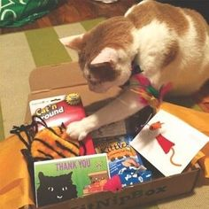 Every month lil' kitty will get a box filled with special toys and treats!Subscriptions range from $19-$29, kitnipbox.com.