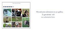 Make an Online Memorial Book for Your Pet | Pet Memorial Services