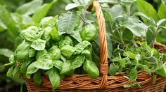 Where did you go wrong with your herb garden? Avoid these common gardening mistakes to grow healthy, productive herbs at home.