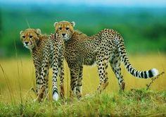 La tristeza de la fauna de Sudáfrica por culpa del corrupto Jacob Zuma.- El Muni.
