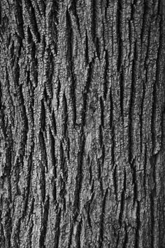 """""""Dendroderm #3"""" by Pierre-Paul De Beir #art #artphotography #photography #tictacartcollection #dendroderm #bark #pierrepauldebeir"""