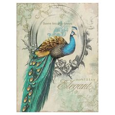 Found it at Wayfair - Peacock Poise Canvas Art