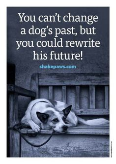 Animal rescue quotes inspirational help save a life today animals in everyday life Rescue Dog Quotes, Rescue Dogs, Pet Quotes, Shelter Dogs, Animal Shelter, Pitbull, Pekinese, Animal Quotes, Dog Life