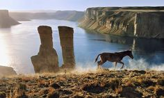 High in the mountains of Afghanistan, a colt runs beside the Band-e Amir lakes. Photograph: Steve McCurry/Magnum