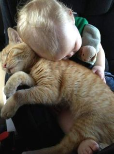 ginger cat and baby..