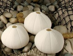Luna Del Mar Shell T-Lites - Starfish, Sea Urchin, Nautilus, Conch, Sea Snail, Sand Dollar - Porcelain T-Lites. Great Gifts.