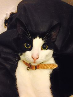 ** MISSING – LIVERPOOL ** Hi, my cat went missing on Friday (03/06/2016) her name is Princessa. She went missing in the Norris Green area, please could you all keep an eye out for her.