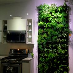 Herb wall. one entire wall in the dining room. Micro herbs of various types, sorrels, regular herbs, edible flowers.