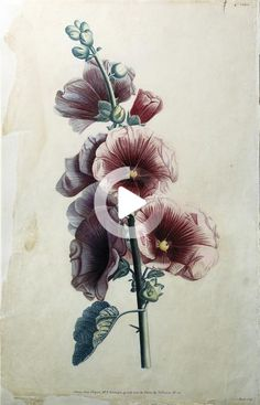 Hollyhock by Jean Louis Prevost - Price Estimate: $500 - $1000 #thightattoos Flower Thigh Tattoos, Pin On, Hollyhock, Flowers, Painting, Art, Flower Tattoos On Thigh, Art Background, Floral Thigh Tattoos