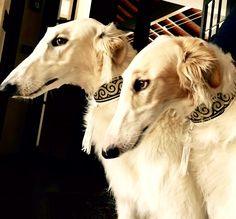 Traditional tasseled collars